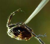 فیلم مستند حیات وحش عنکبوت