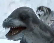 مبارزه سگ ها و شیر دریایی قطب