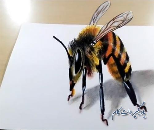 نقاشی سه بعدی زنبور عسل