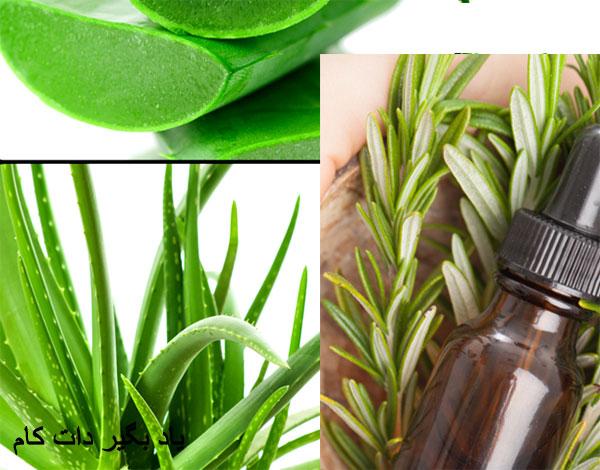 گیاهانی برای تسکین درد زانو مفاصل